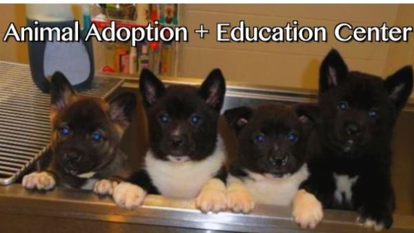 AnimalAdoption_Large