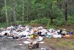 Illegally Dumped Waste in the Woods