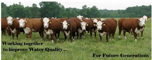 A photo of brown and white cows  that promotes the district's work to improve water quality.
